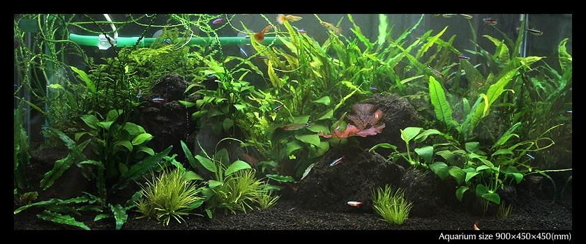 aquarium_01-min