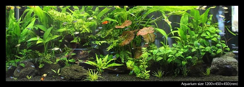 aquarium_02-min