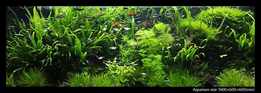 aquarium_03-min