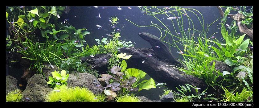 aquarium_04-min